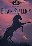 black stallion review